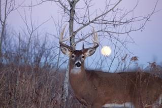 Use onX Hunt's CWD Map to Fight Spread of Deadly Disease