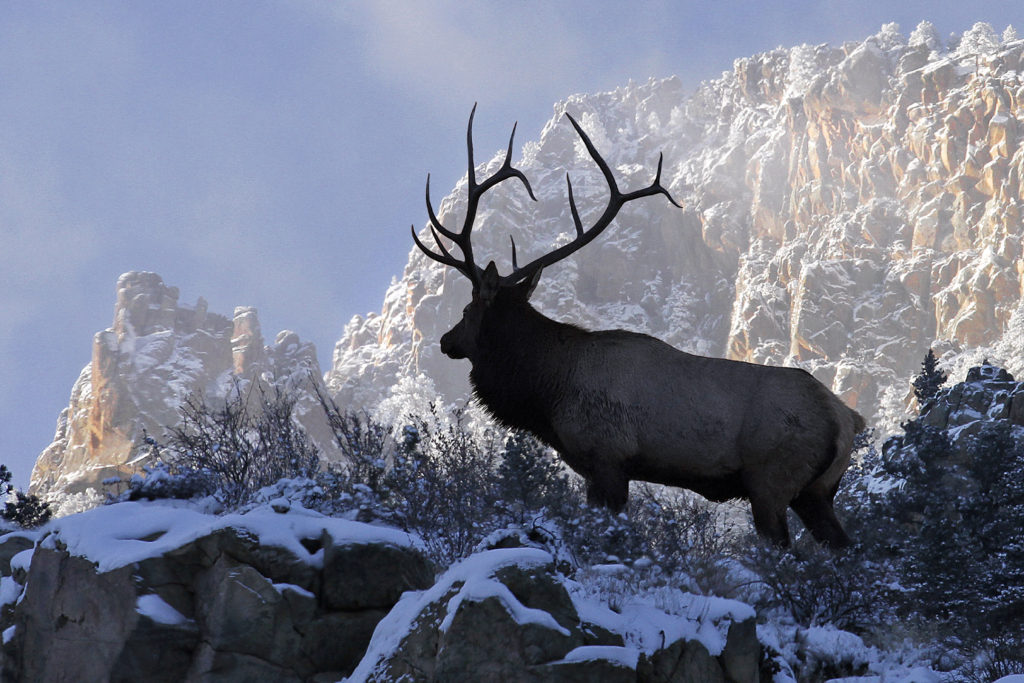 RMEF Ratchets Up Land Protection Work in Wyoming