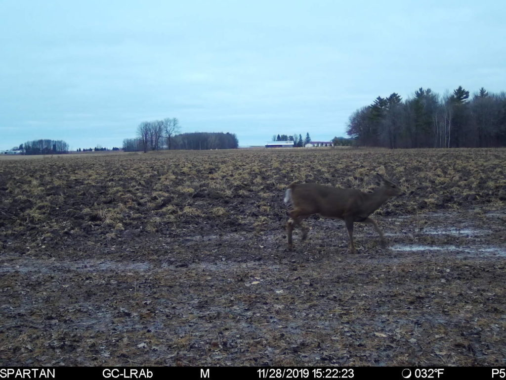 DNR Confirms CWD Detected In Washington County; New Baiting And Feeding Ban Now For Ozaukee County