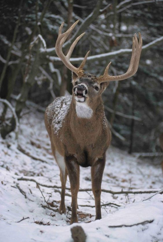 DNR Confirms CWD Detected In Marathon County