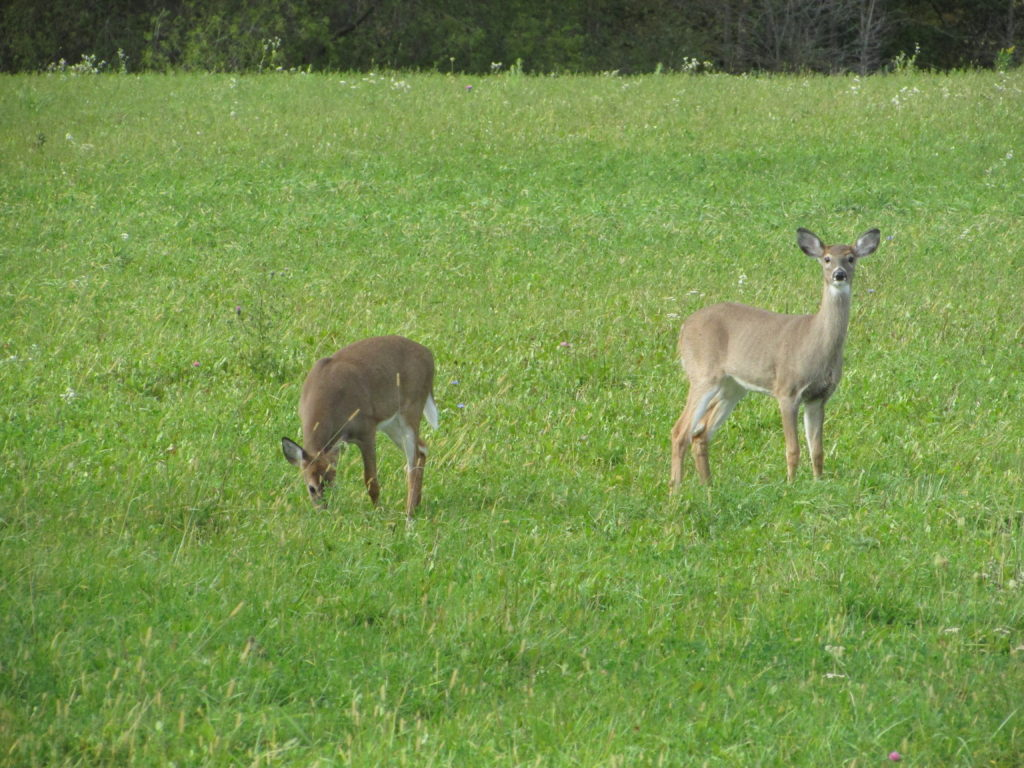 HUNTER TRIES BIZARRE EXPERIMENT, URINATES ON DEER SCRAPE from WideOpenSpaces