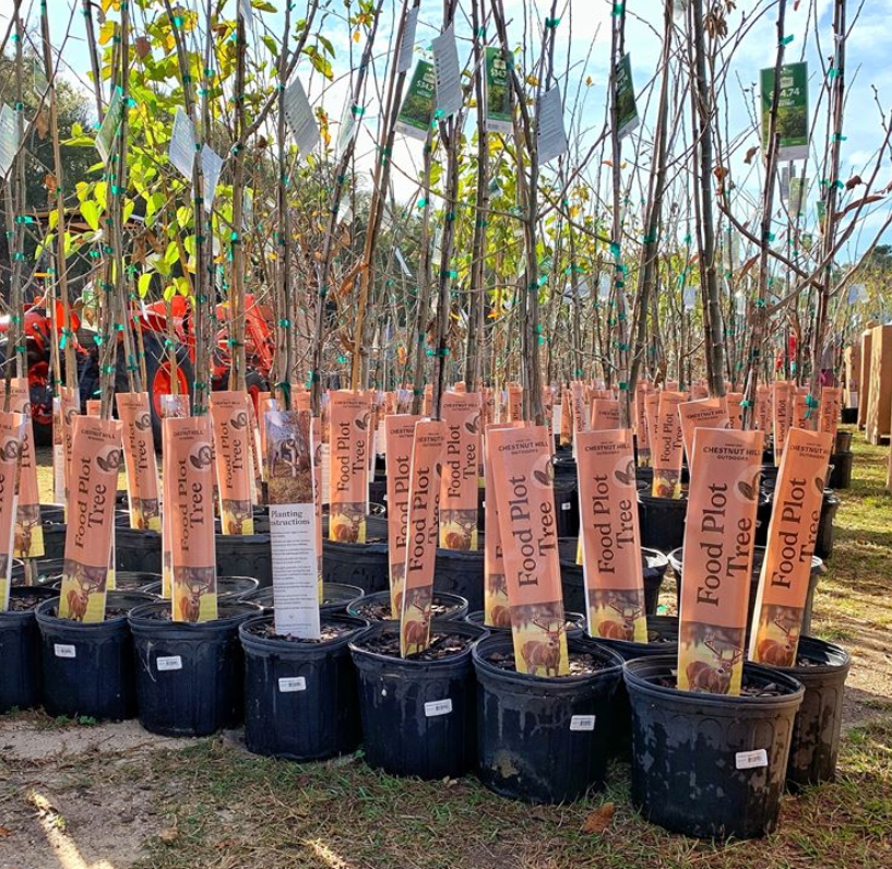 Chestnut Hill Outdoors: Trees Have Arrived to Select Walmart Stores Now!  FOOD PLOT TREES